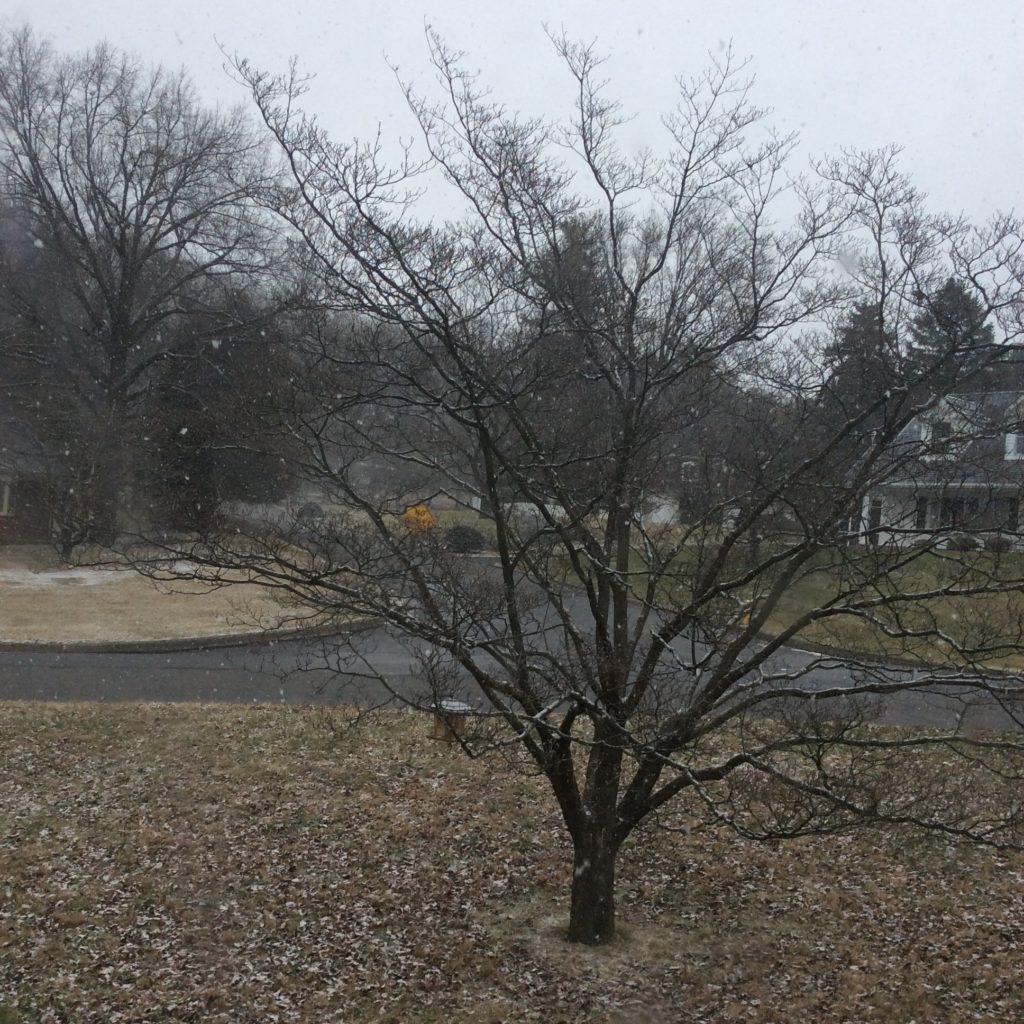snow falling on dogwood