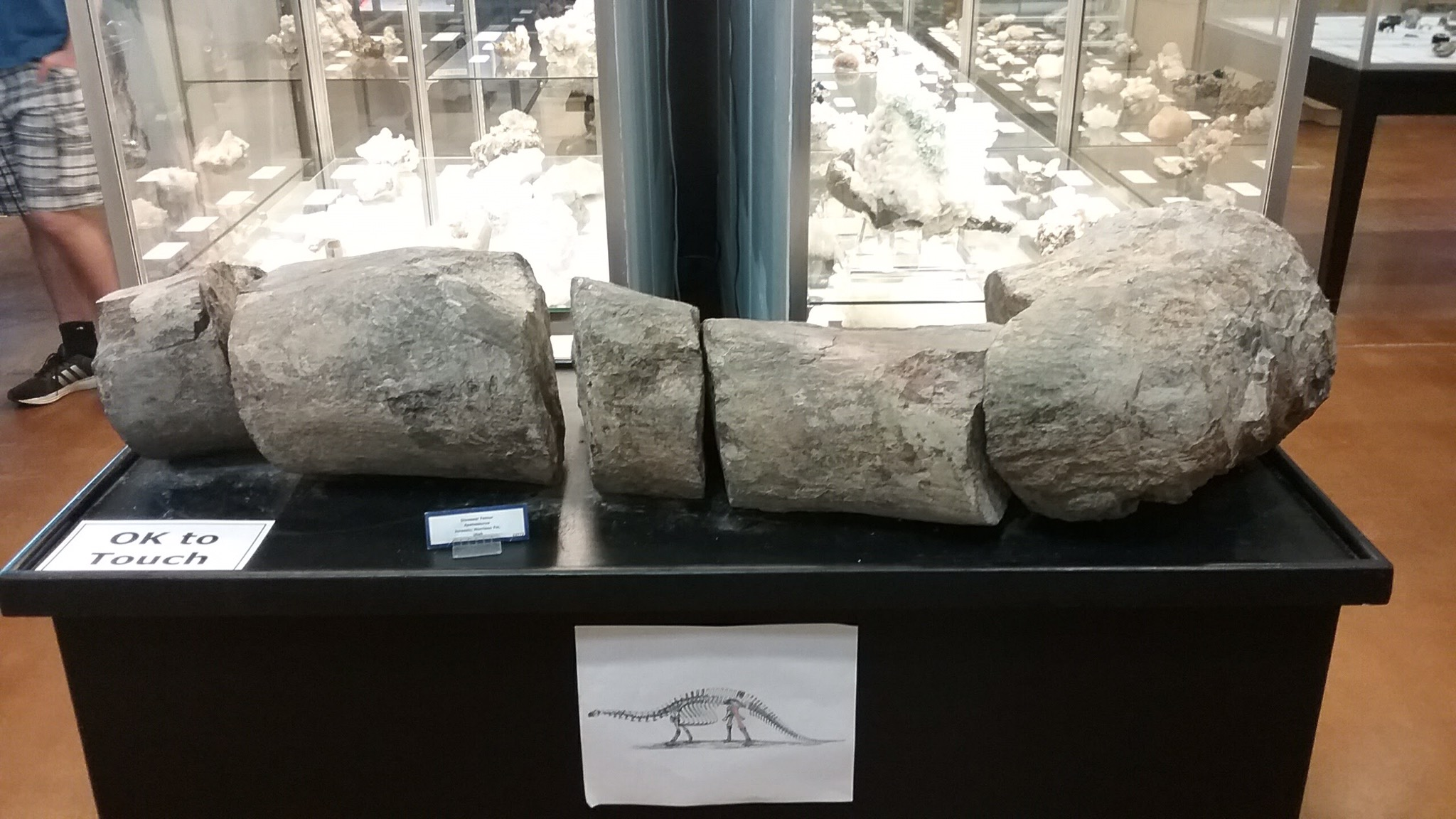 broken dinosaur femur, fossilized