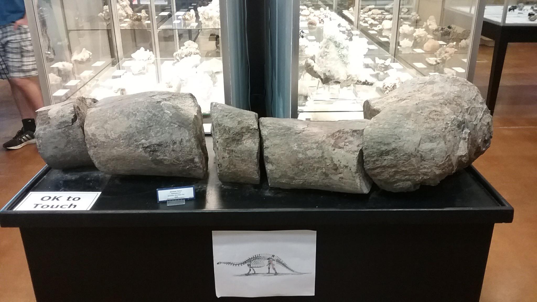 broken dinosaur femur, fossilized