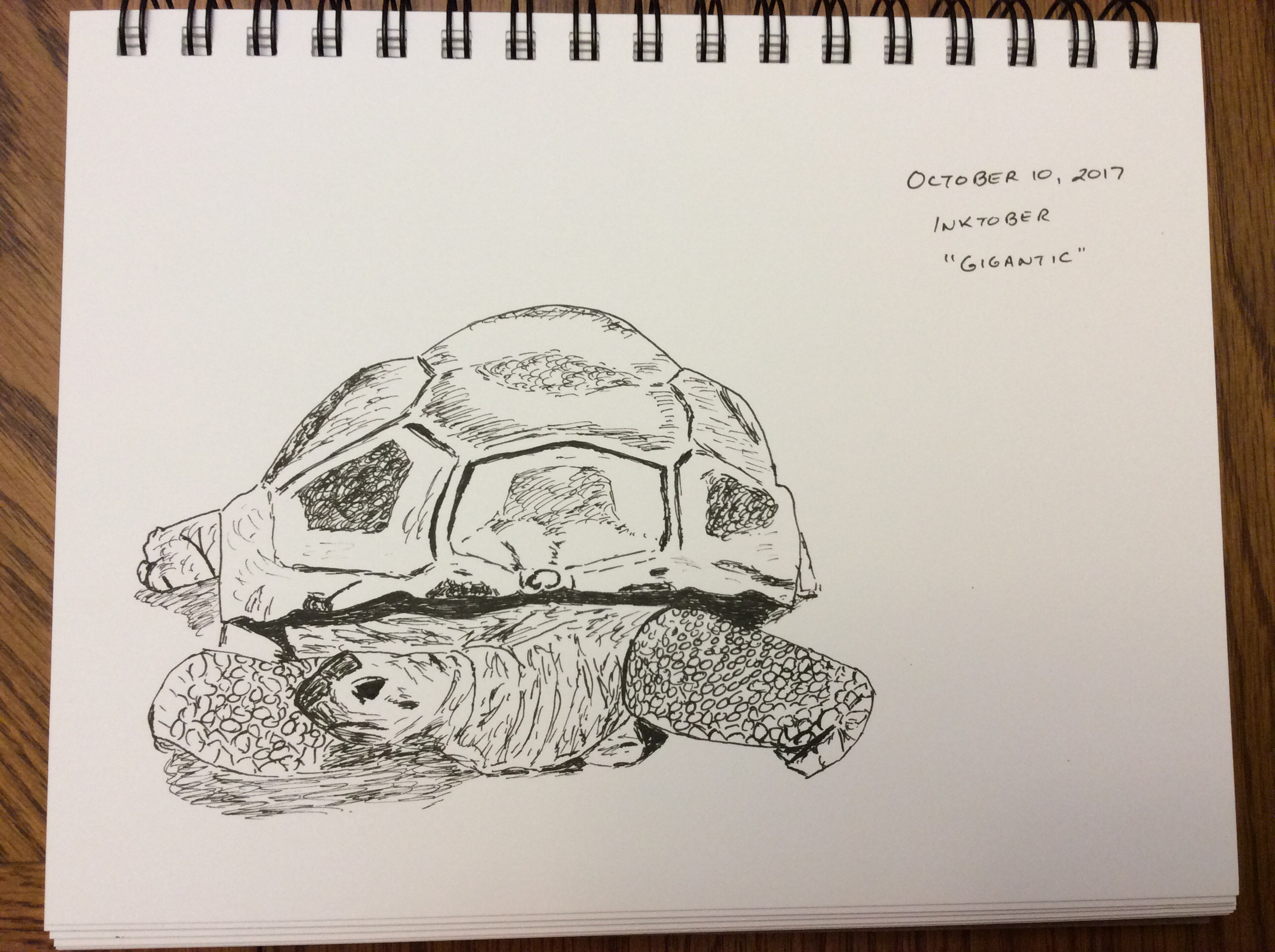 ink drawing of giant tortoise