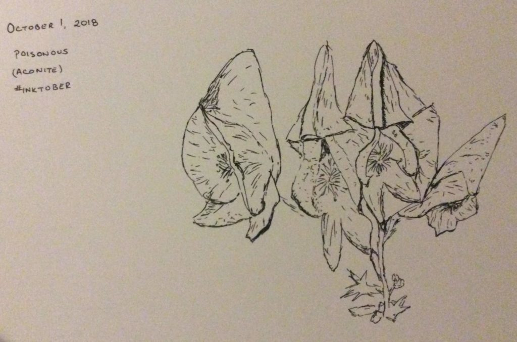ink drawing of aconite flowers