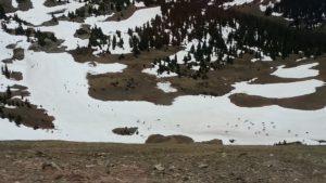 elk on late ice
